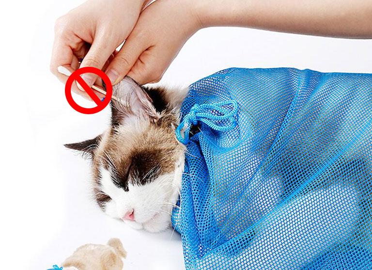 如何正确给猫咪洗耳