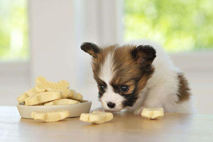 狗狗腹泻的饮食祸原以及照顾小技巧