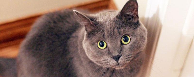 如何预防猫咪口炎