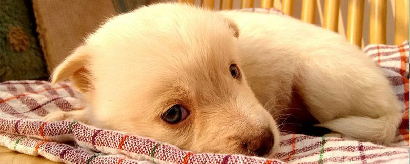 狗狗胃炎如何治疗