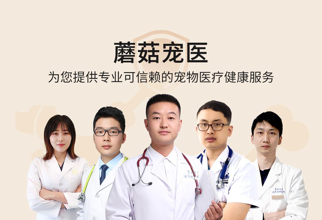 蘑菇宠医为您提供符合循证医学的安全医疗服务